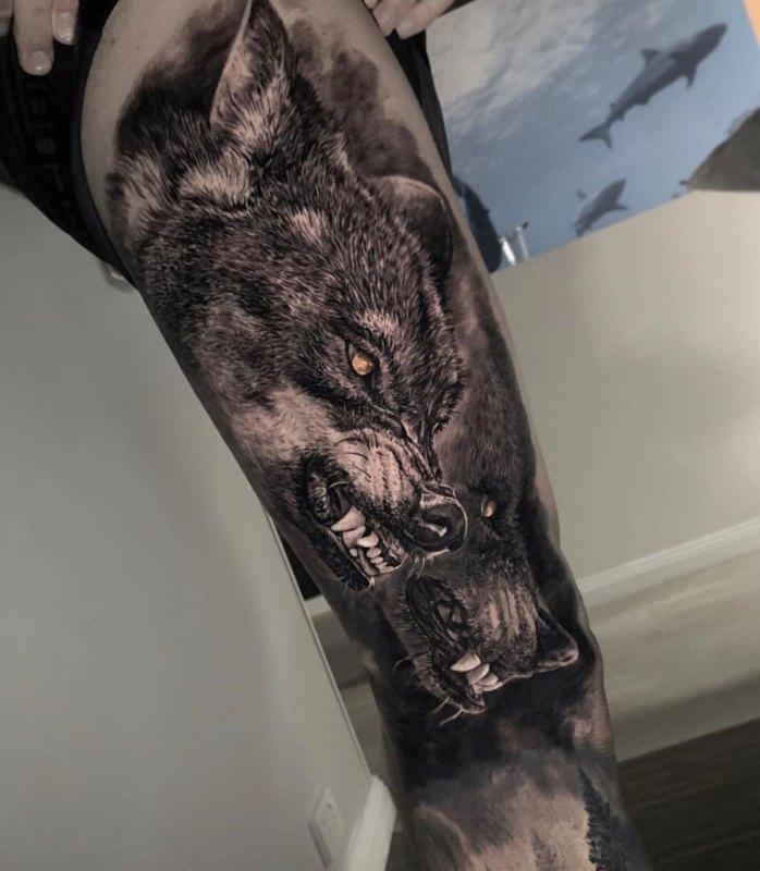 два агрессивных волка