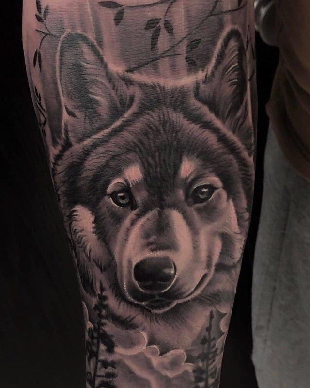 Морда серого волка
