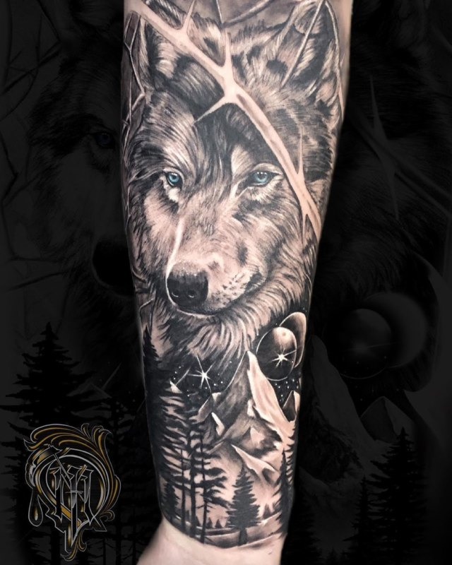 Волк в природе