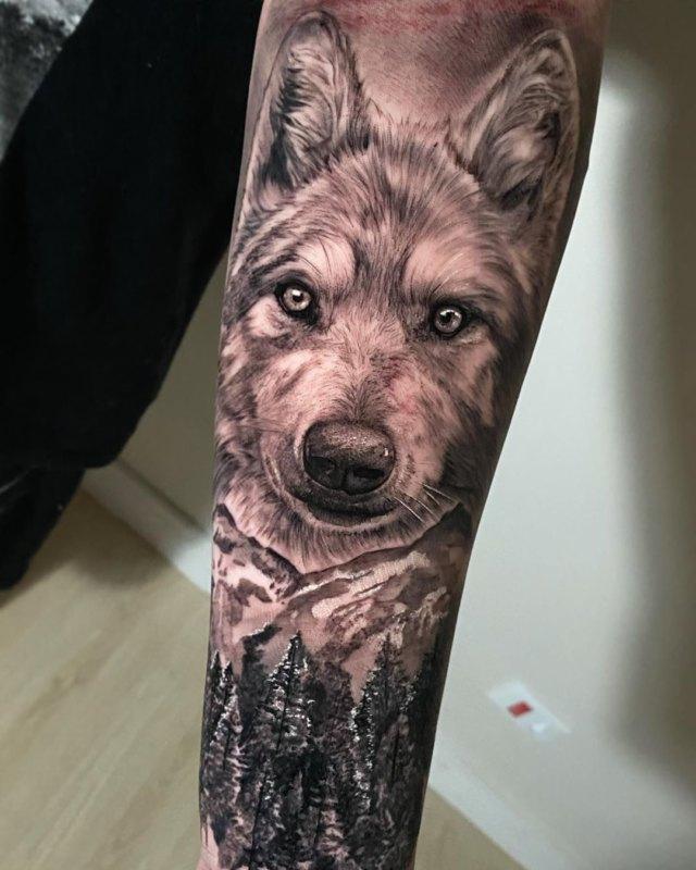 добродушный взгляд волка