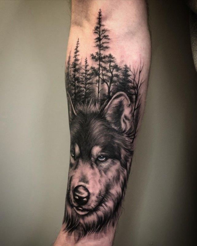 Волк в темном лесу