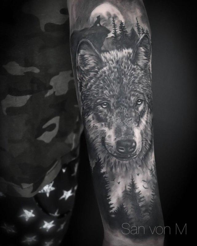 серый волк в природе